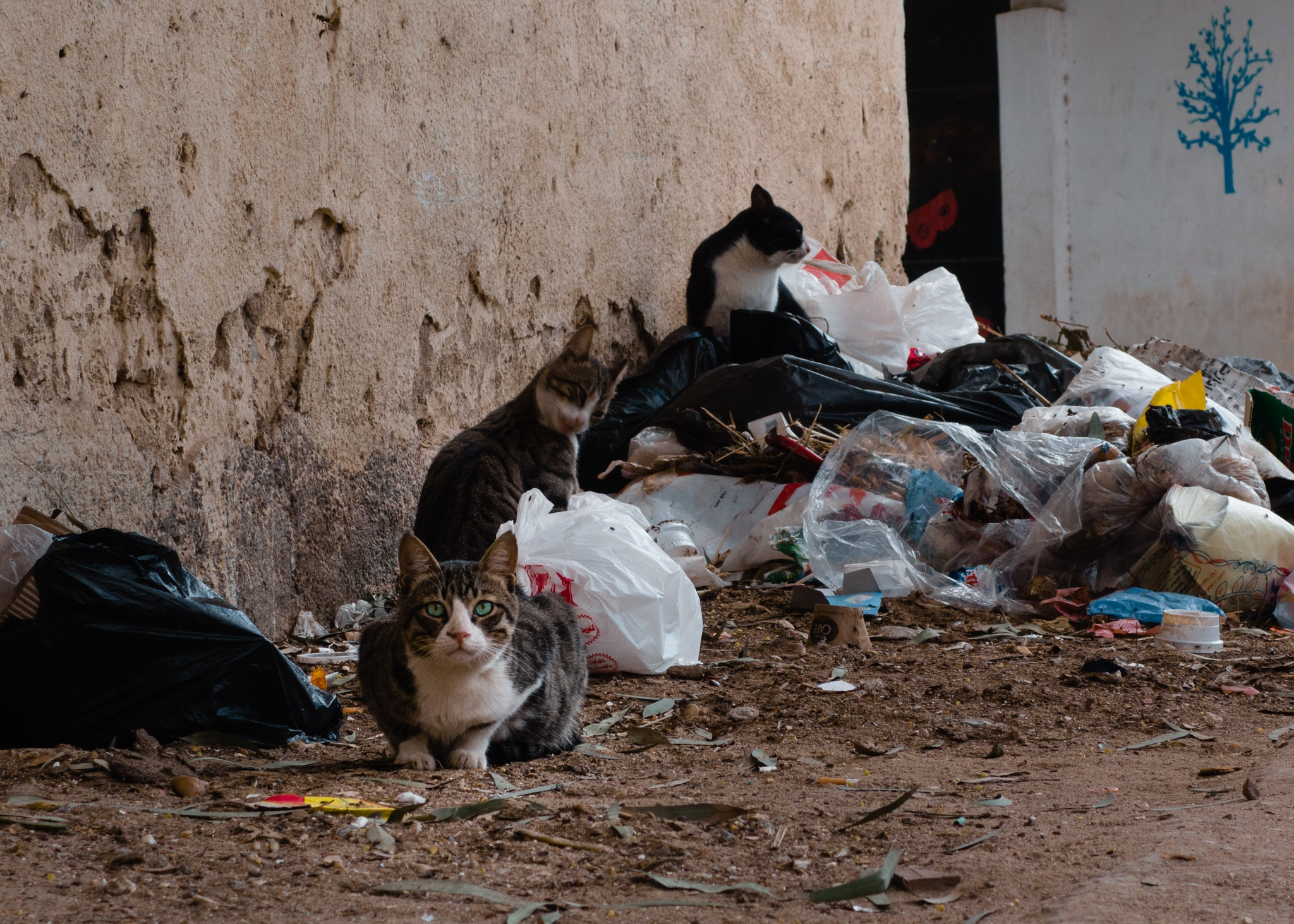Giza, Egypt: Beauty & Filth